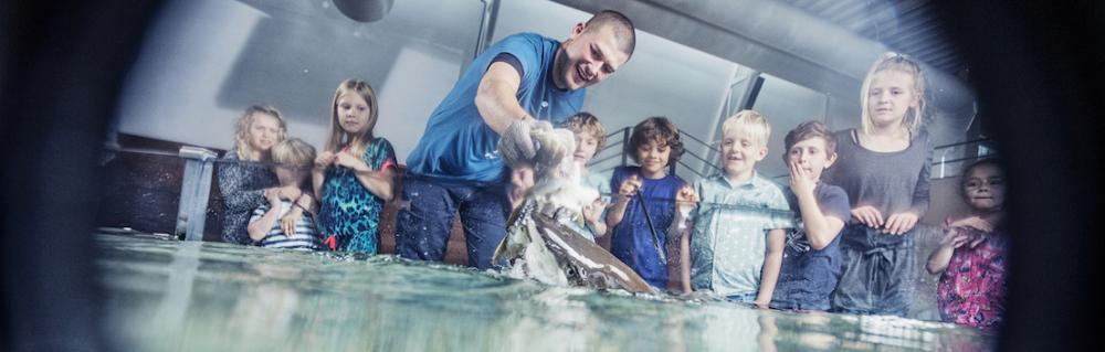 Mand fodrer stor fisk med en blæksprutte