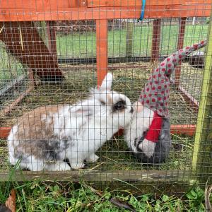 Kanin der snuser til en lille nisse